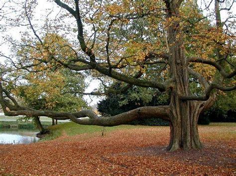 alberi alto fusto da giardino alberi di alto fusto alberi alberi ad alto fusto