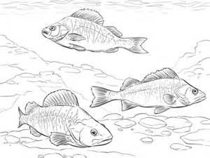 boatsetter ads tarpon fish template bing images