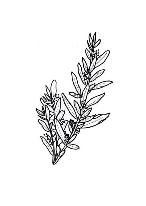 olive tattoo designs best 25 olive branch ideas on olive