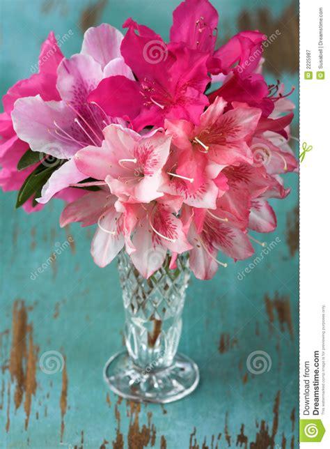 azalee in vaso azalee in vaso di vetro immagine stock immagine di fresco