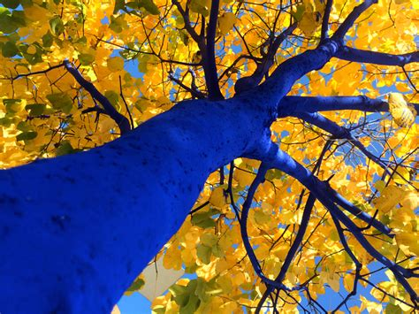 konstantin dimopoulos paints blue trees to help cities