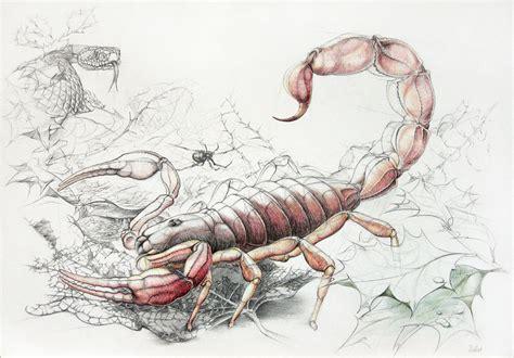 skorpion sternzeichen sternzeichen skorpion