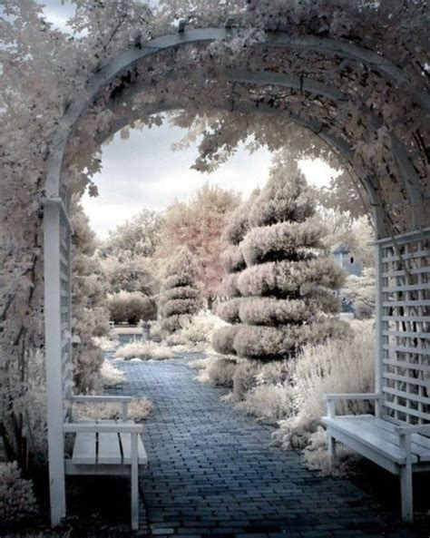 the garden in winter winter winter garden gardening and