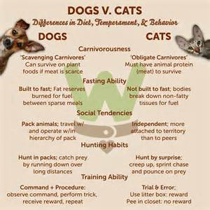 Compare And Contrast Essay On Cats And Dogs by Compare And Contrast Essay On Cats And Dogs Veterinary Ethisfo X Fc2