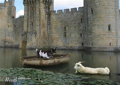catamaran definition origin photos of goats in weird places lazer horse