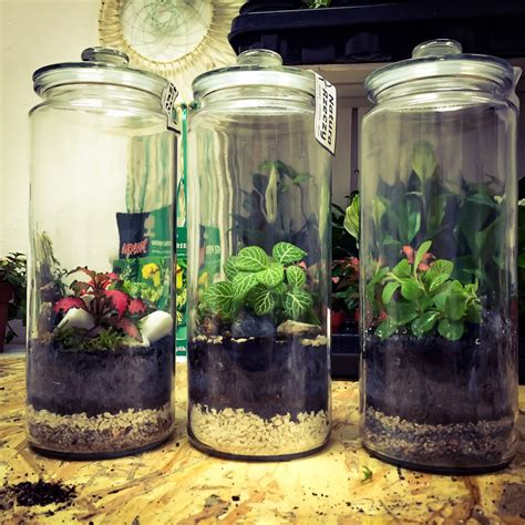 images branch plant house flower glass home
