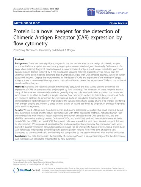 protein l protein l a novel reagent for the detection of chimeric