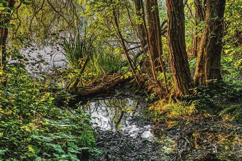 Mirroring Trees sw water mirroring 183 free photo on pixabay