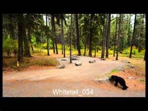whitetail cground farragut state park idaho