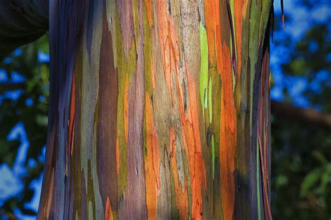 rainbow trees rainbow eucalyptus dots on screen