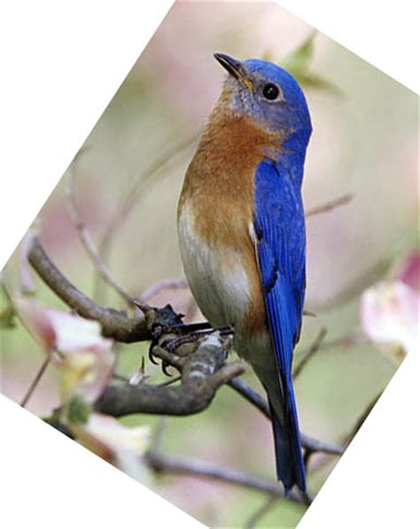 blue bird food