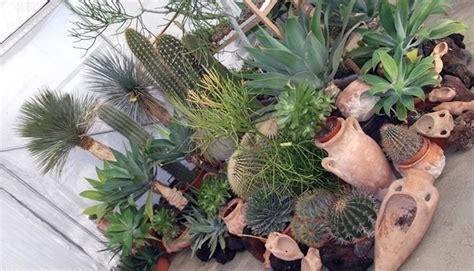 come fare un giardino di piante grasse innaffiare piante grasse piante grasse come innaffiare