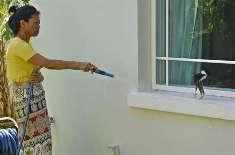 fensterbank maße ein verr 252 ckter vogel petanque in phuket