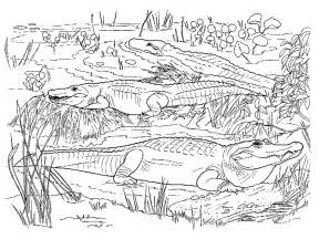 swamp animals coloring pages images