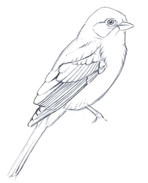 Sketches Real Name by Sketch Birds Drawing Pictures Bird Sketch Pic