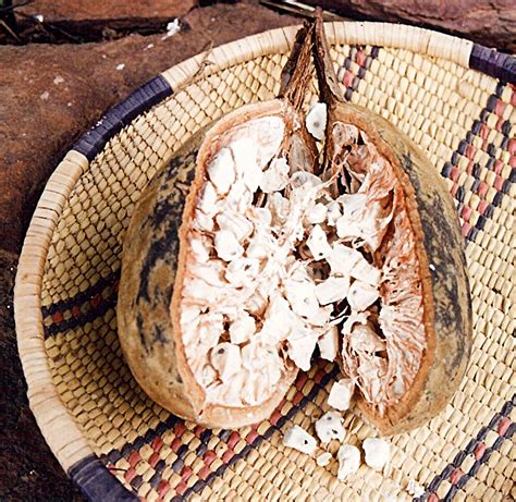 seed from madagascar books the remarkable baobab pakenham les reveries de