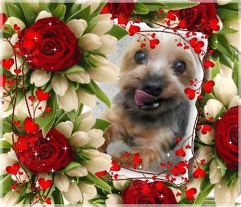 my yorkie is breathing fast terrier pooh