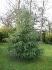 Unique small evergreen trees for landscaping 2 small evergreen trees