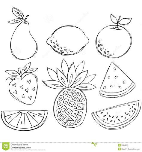doodle fruit sketchy doodle fruit vector stock photography image 9964612