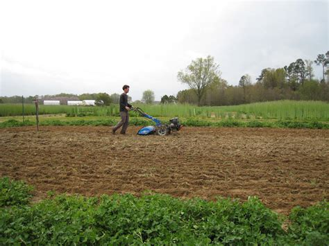 Cover Crops In The Vegetable Garden State By State Best Cover Crop For Vegetable Garden