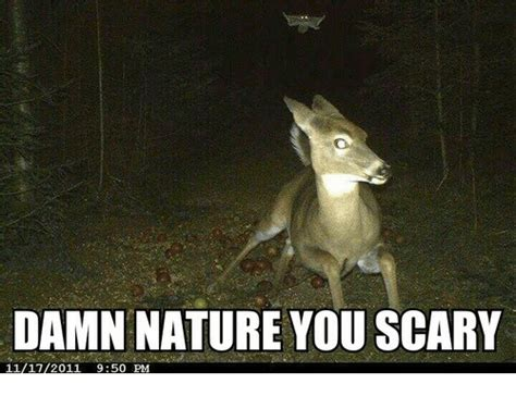 Damn Nature You Scary Meme - 25 best memes about nature you scary nature you scary memes