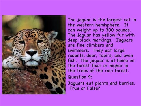 what does a jaguar eat rainforest