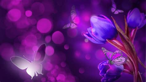 firefox themes purple purple tulip surprise flowers nature background