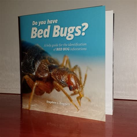 how do you say bed in spanish how do you say bed bugs in 28 images how do you say