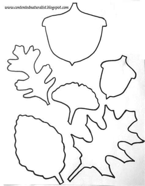 free leaf templates printable the contented naturalist leaf template craft with free