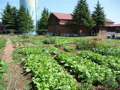 52 best images about portland gardening on