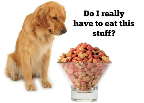 how should a puppy be on puppy food how should dogs eat puppy food recipes food