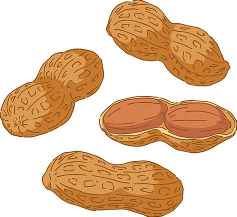 peanuts clipart peanut clipart one pencil and in color peanut clipart one