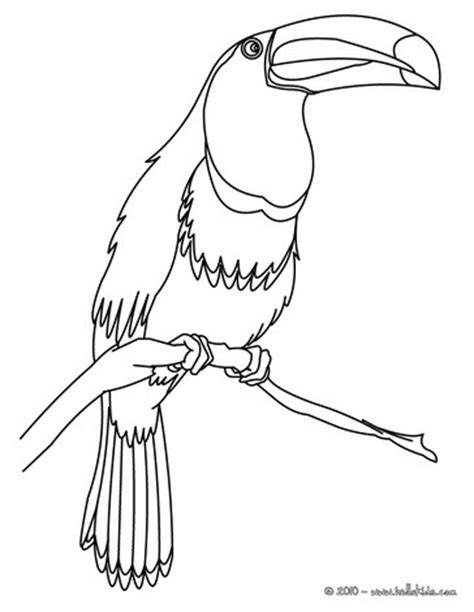 toucan coloring page toco toucan coloring pages hellokids