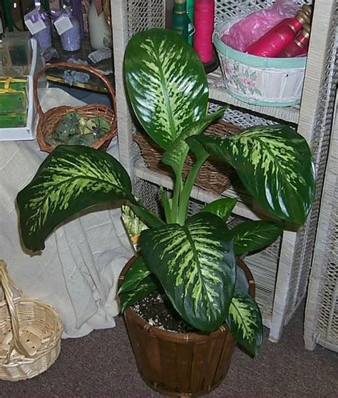 poisonous house plants 301 moved permanently
