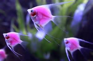 Best Plants For Tropical Aquarium - how to pick and care for pet fish wishforpets