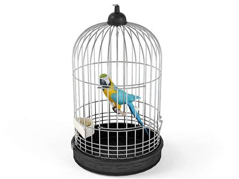 parrot bird in a cage 3d model obj cgtrader