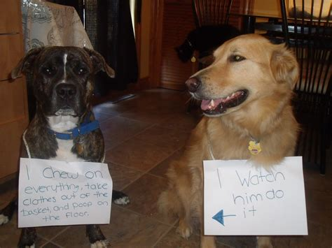puppy shaming shaming friends of rowlett animals