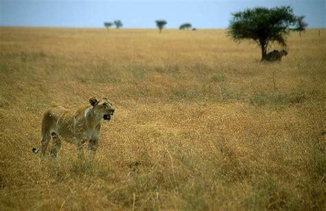 dnde estn los leones 8467563354 lugares