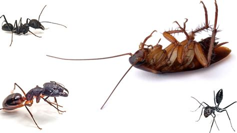 house pest safe pest 100 safe but effective against all insects