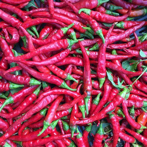 Long Red Cayenne Pepper Seeds (Capsicum annuum)