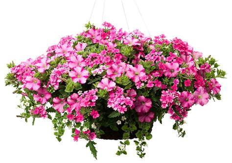 home depot save 2 on any proven winner hanging basket or