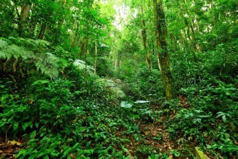 plants in tropical forest tropical rainforest green plants on the earth world visits
