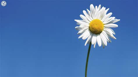 win with flower single flower wallpaper 183