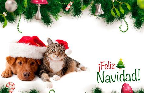 imagenes navidad gatitos colecci 243 n de tarjetas de navidad de perros y gatos