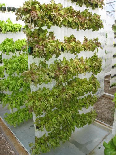 vertical gardening with hydroponics an combo