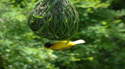 unusuallycute see these pics of bird nests on most
