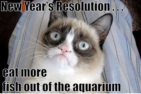 New Cat Memes - happy new year memes 2017 very funny images jokes