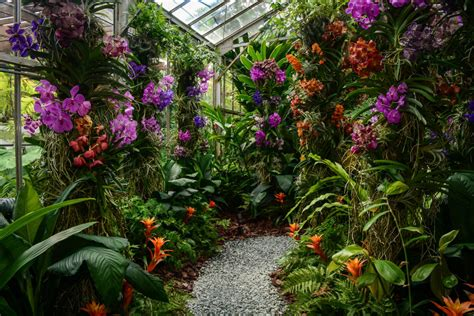 selby botanical garden selby gardens orchid show breaks revenue records