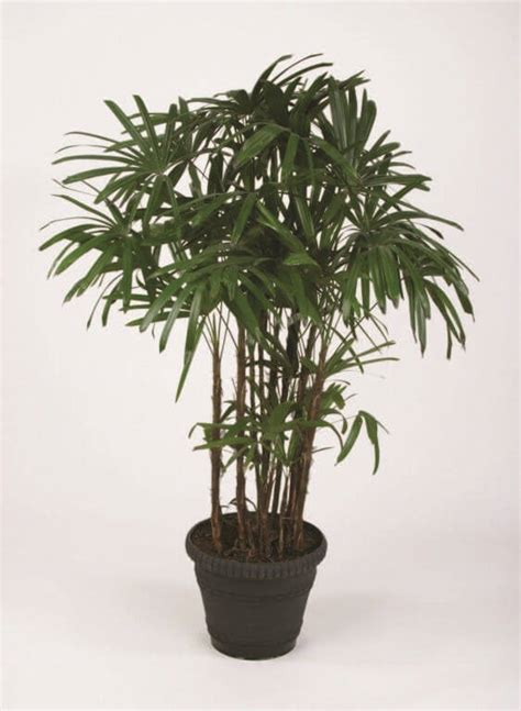 palm house plants 10 air purifier house plants apartment geeks