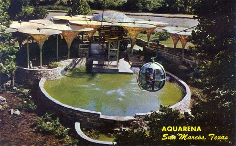 glass bottom boat san antonio 1000 images about history of aquarena and spring lake in